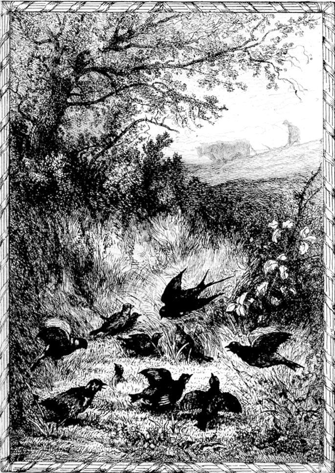 L 39 hirondelle et les petits oiseaux for Les petits oiseaux
