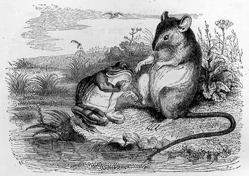 La Grenouille et le Rat  dans GRENOUILLE grerat